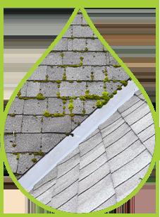 roofwashing2